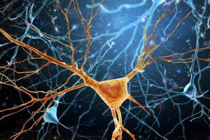 Illustration Of Human Brain 800x534 1